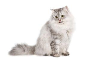 Filz Katzenhöhle: Eine Katze